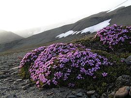 Отправляемся на Хребет Бруке.Национальный парк Гейтс-оф-те-Арктик (Ворота Арктики)