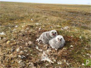 Сибирская тундра полная загадок