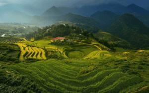 Вьетнам поля