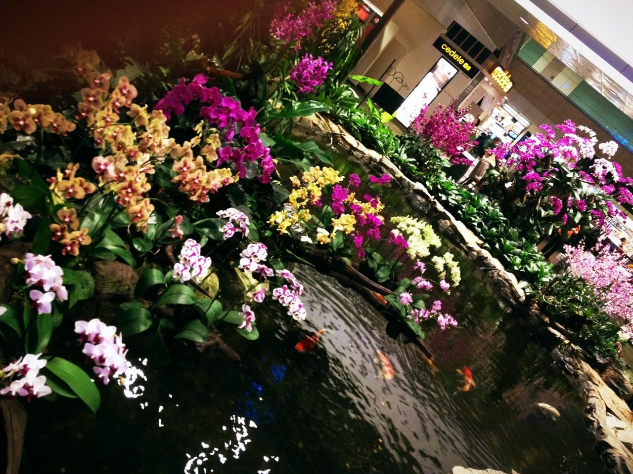 пресс-службе горсовета сад орхидей в сингапуре фото тон