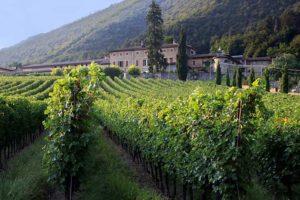 Винные туры в Италию: новейший вид интересных странствий