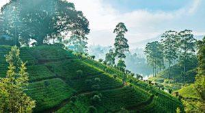 Отдых на Шри-Ланке — путешествие на райский остров