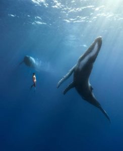 Тенерифе киты